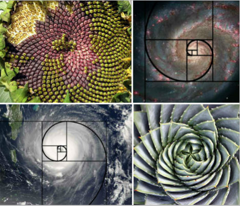golden-spiral-main